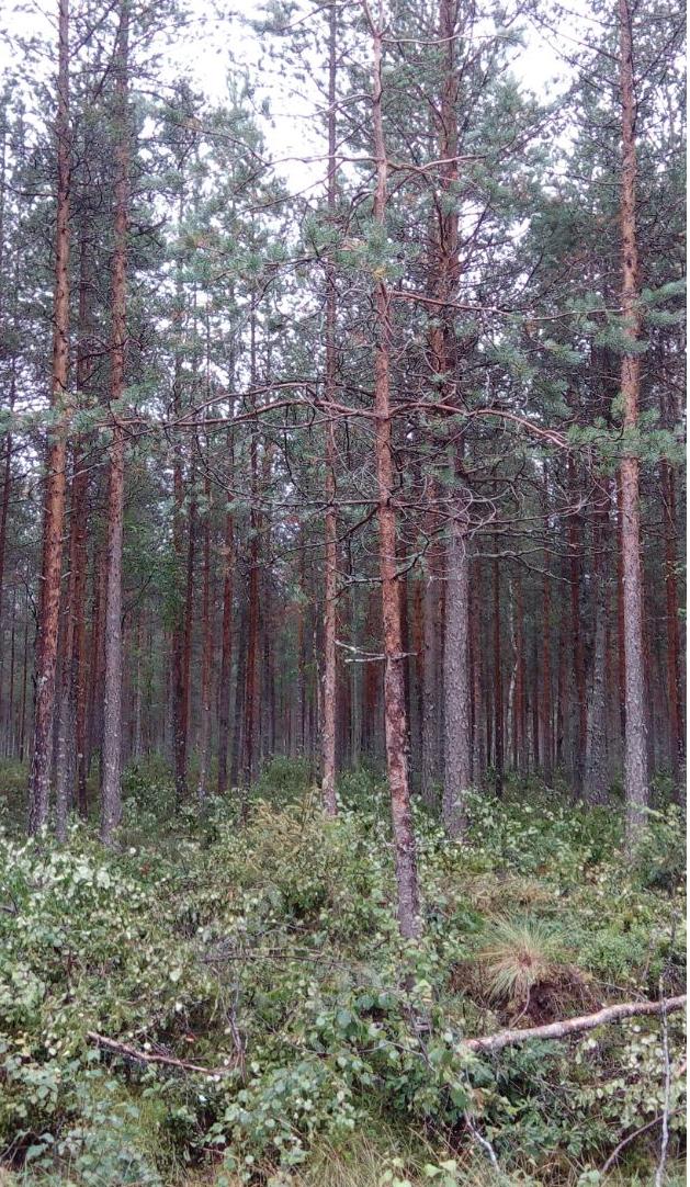 Metsäpohjola